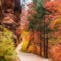 Path,Through,Refrigerator,Canyon,Towards,Angels,Landing,In,Zion,Canyon